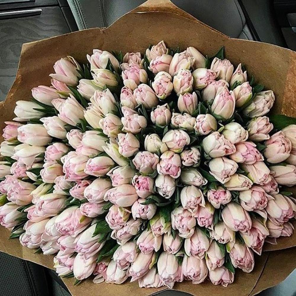 Букет из 151 розового тюльпана