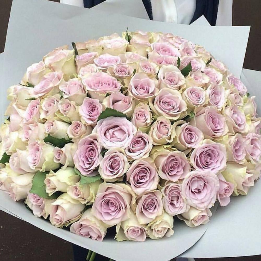 Букет из 101 розы сорта Morning Dew