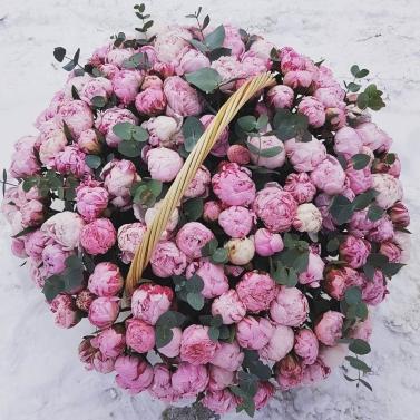 Букет из 151 розового пиона с эвкалиптом в корзине