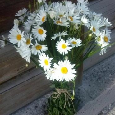 Букет из 39 садовых ромашек