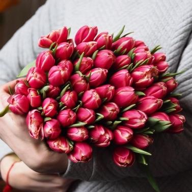 Букет из 51 малинового тюльпана
