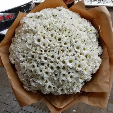 Букет из 85 кустовых ромашек
